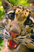 Wild Films Cats Part 2